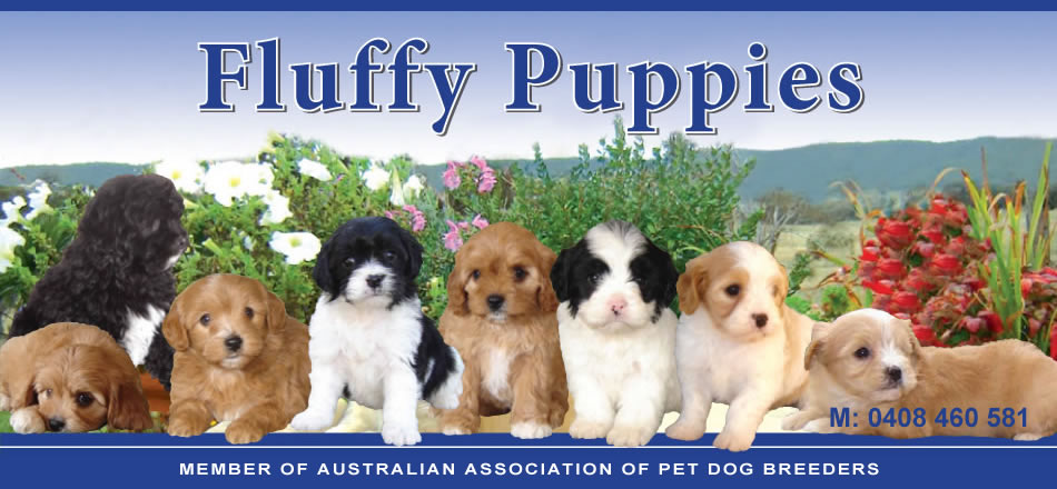 Puppies For Sale - Fluffy Puppies