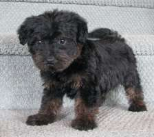 SCHNOODLE Jeanette Female 2 900-H200